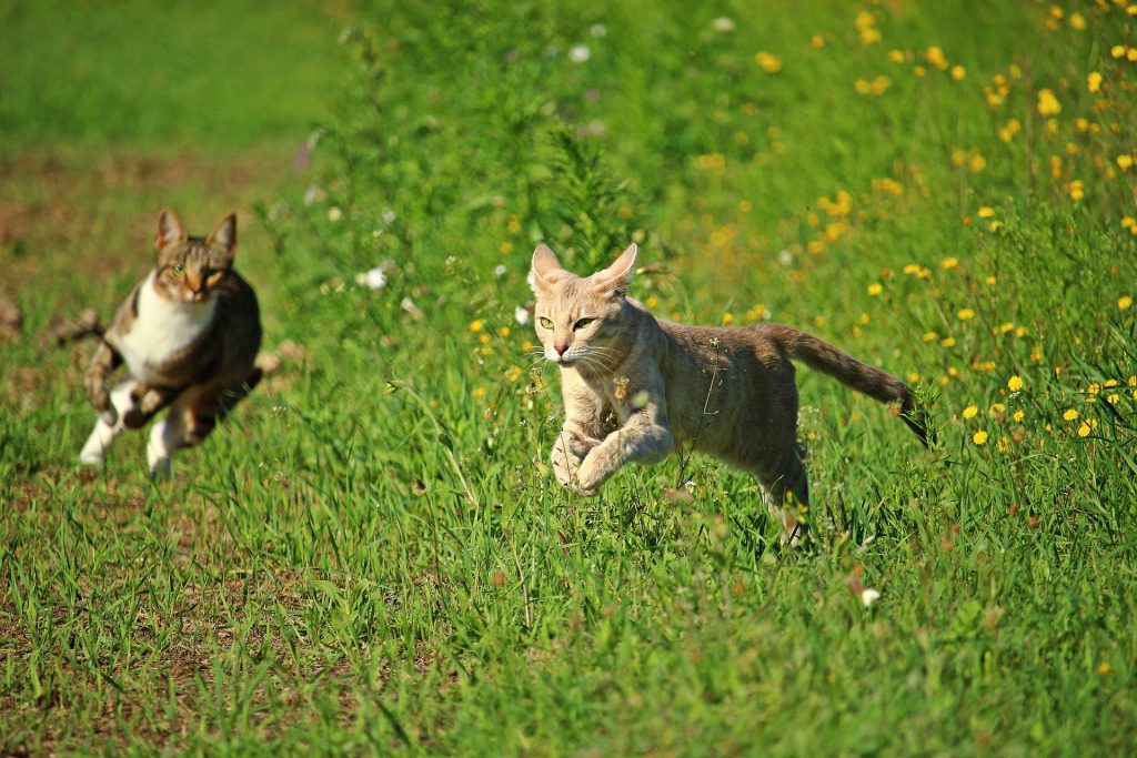 Cats and Exercise: Why, How and How Much
