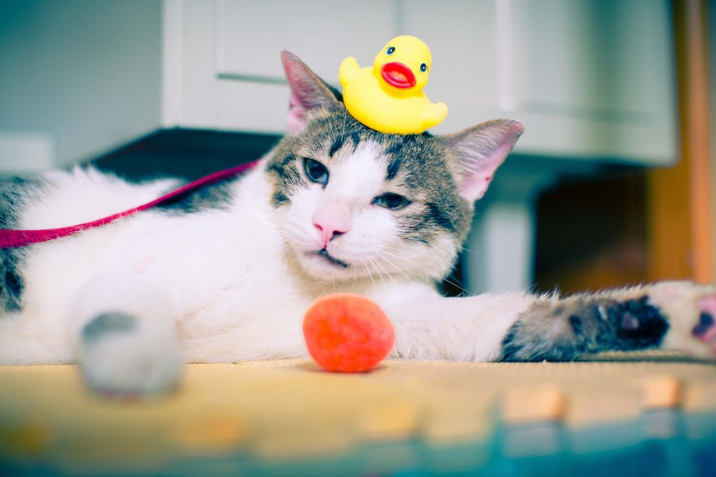 How To Play With Your Cat: Fun Games for Cats
